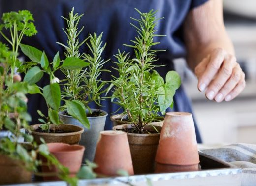 Ready For A New Hobby? Our Complete Guide To Herb Gardening Is Here
