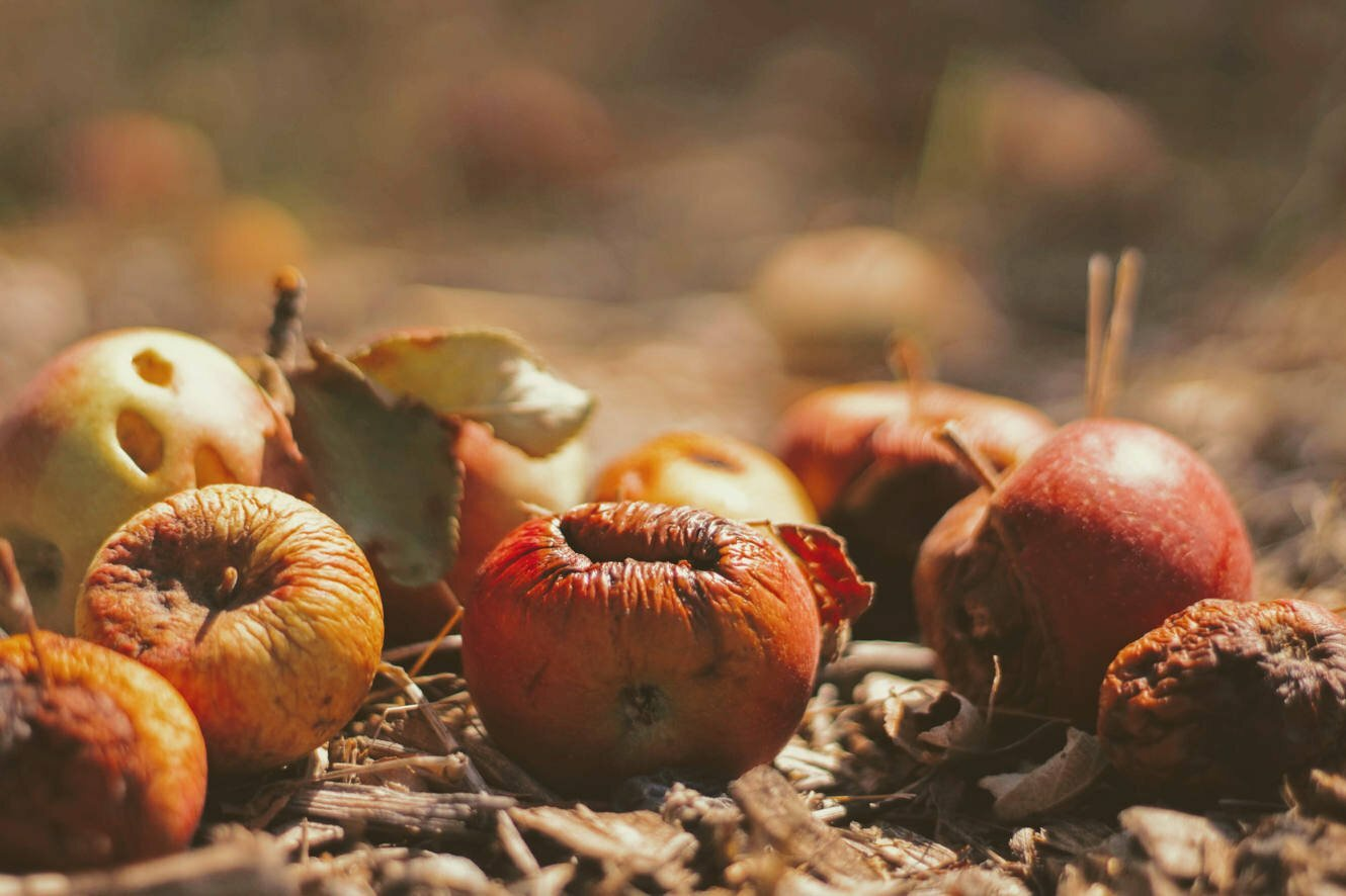 The Problem Of Food Waste | Sustainability | Luxiders MAgazine