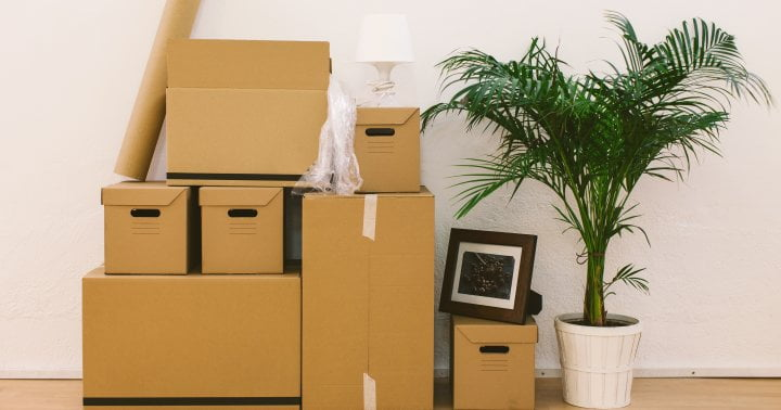 Moving Homes Is Tough On Houseplants: 7 Pro Tips That'll Keep Them Safe