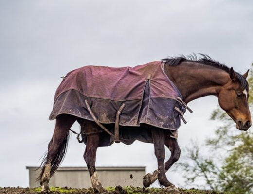 Importance Of Having Different Horse Rugs For Every Season